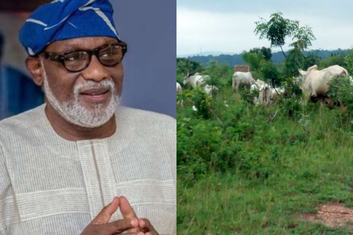 Why Fulani Cannot Vacate Ondo Forest