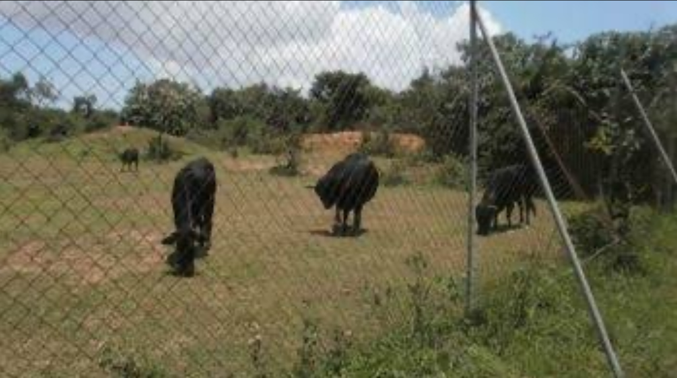 FG To Enhance Security In Pandam Game Reserve